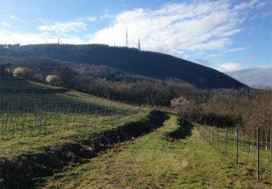 Il giro e la salita del Monte Venda 601 m s.l.m.